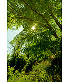 Sunlight, Tree