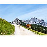 Mountain Range, Cow
