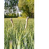 Meadow, Jut, Female Legs