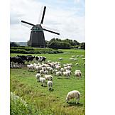 Cows, Windmill, Sheep