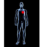 Heart, Radiology, Diagnostic