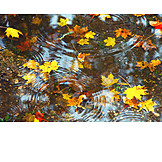 Leaves, Autumn, Water