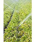 Agriculture, Watering, Irrigation Equipment