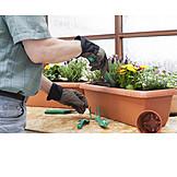 Flowers, Flower Pot, Gardening, Planting