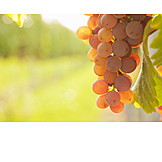Fruits, Red, Grapes, Viticulture