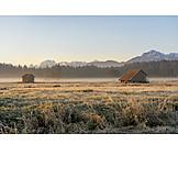 Meadow, Frost, Morning Fog