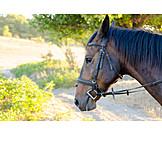 Horse, Bridle