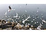 Sea, Coast, Seagulls Flock