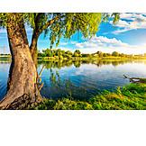 Tree, Lake, Shore