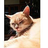 Sunlight, Cat, Napping