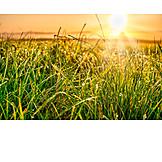 Meadow, Dewdrop, Morning Light