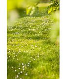 Meadow, Spring, Daisy