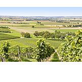 Vineyards, Cultural Landscape, Hohenlohe
