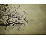 Tree, Branches, Leafless