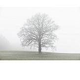 Tree, Fog, Lonely