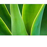 Close Up, Green, Leaf