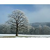Tree, Winter, Snow