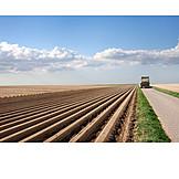 Landwirtschaft, Spargel, Anbau