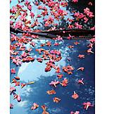 Auto, Oleanderblüte