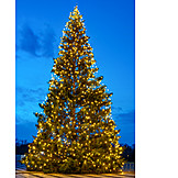 Christmas Lights, Christmas Tree