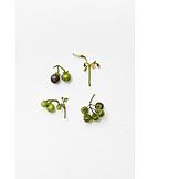 Blossom, Solanaceous Herb, Fruit