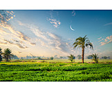 Agriculture, Egypt, Cultivatedland