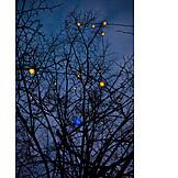 Tree, Christmas Lights, Poinsettia