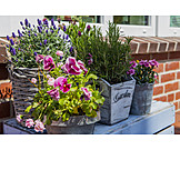 Flowers, Balcony, Potted Plants