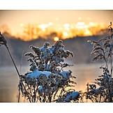 Grasses, Winter, Snow, Morning Light