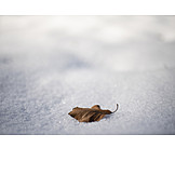 Snow, Autumn Leaf