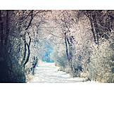 Footpath, Forest, Winter