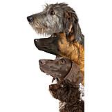 Freundschaft, Hunde, Größenunterschied