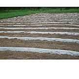 Agriculture, Foil, Topsoil