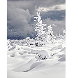 Winter, Snow, Snow Cover