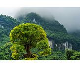 Tree, Wulingyuan