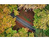 Aerial View, Trees, Street