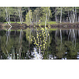 Spring, Moorsee, Schönramer Filz