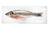 Fish, Prepared Fish, Moronidae