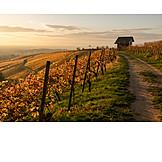 Footpath, Autumn, Vineyard
