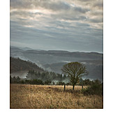 Autumn, Fog, Eifel