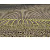 Agriculture, Outbuilding, Maize