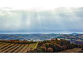 Autumn, Fields, Tuscany