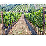 Agriculture, Winemaking, Vineyard, Chianti