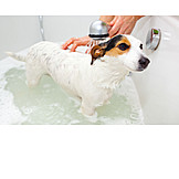 Dog, Grooming, Shower