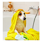 Wet, Dog, Bathtub, Jack Russell Terrier