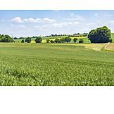 Agriculture, Farmland, Fields