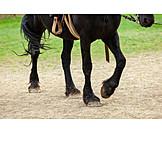Step, Horses