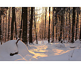 Sunlight, Forest, Snow