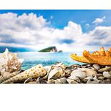 Sea, Coast, Mussels