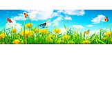 Summer, Butterfly, Flower Meadow